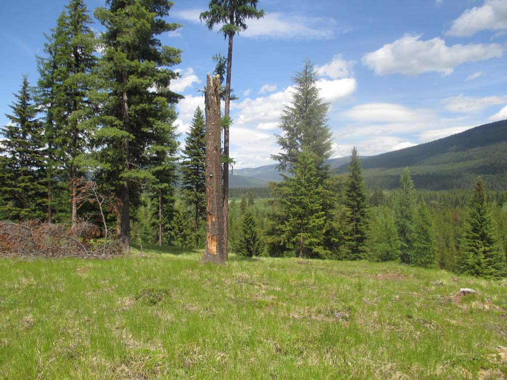 Almost 30 Acres Yaak Land with Cabin and Garage for Sale
