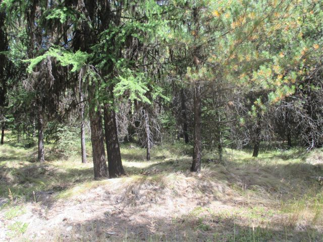 21 Acres Yaak Land for Sale