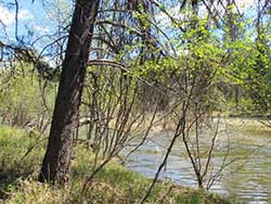 Yaak Land for sale in Northwest Montana