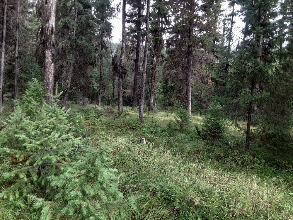 Over 3 Acres Yaak Land for Sale